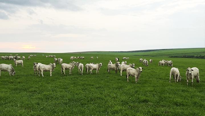Integração Lavoura-Pecuária - Nutrição Animal - Agroceres Multimix