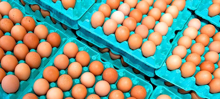 Cálcio e Fósforo - Nutrição Animal - Agroceres Multimix