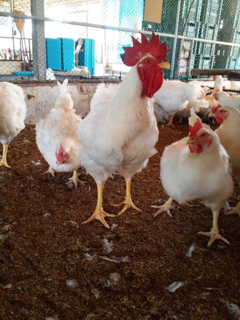 Manejo Nutricional - Nutrição Animal - Agroceres Multimix