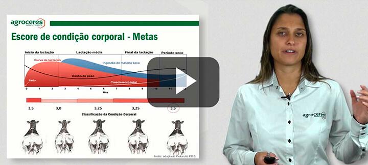 Vacas Leiteiras - Nutrição Animal - Agroceres Multimix