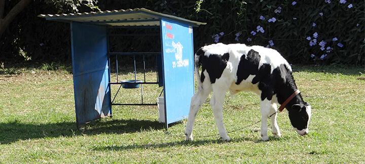 Instalações para Bezerras - Nutrição Animal - Agroceres Multimix