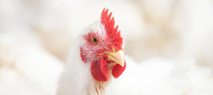 Suplemento Vitamínico - Nutrição Animal - Agroceres Multimix