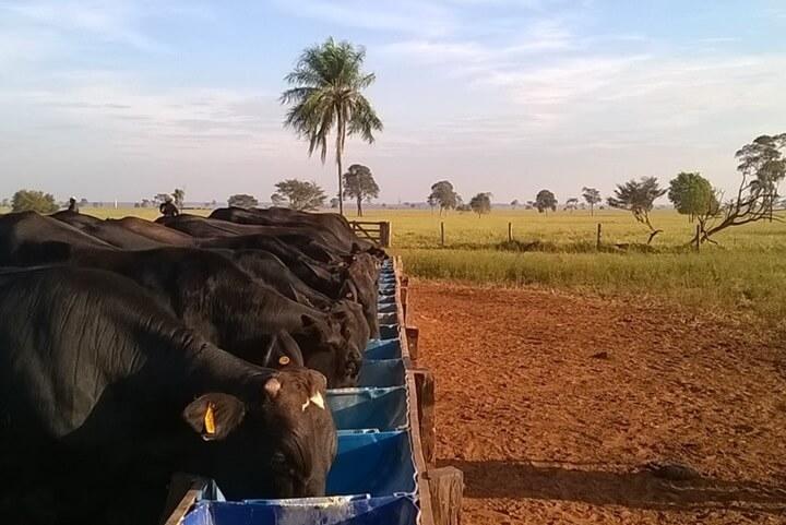 Produção por área - Nutrição Animal - Agroceres Multimix