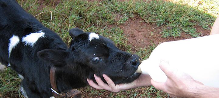 Sucedâneos Lácteos - Nutrição Animal - Agroceres Multimix