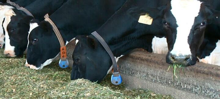 Imagem do post: Inclusão de aditivos na dieta de vacas leiteiras