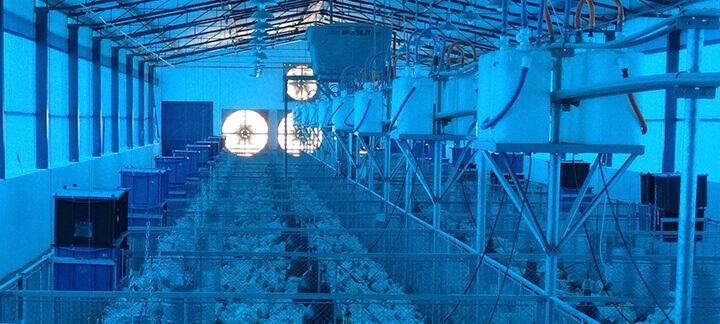 Galpões avícolas - Agroceres Multimix | Nutrição Animal