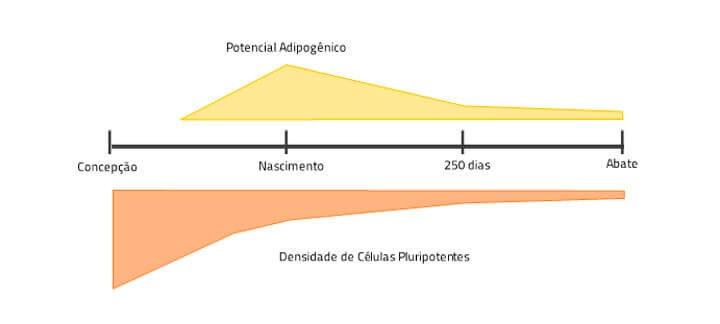 Post: Programação Fetal. Gráfico potencial adipogênico da concepção até o abate de bovinos
