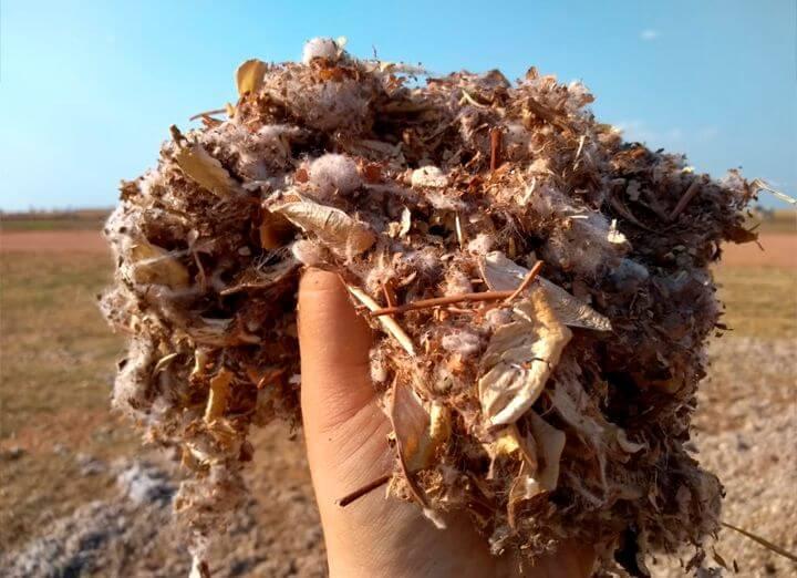 Capulho de algodão