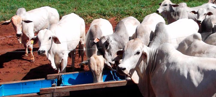 Período das águas. Geração agPastto - Parte 2 | Nutrição Animal