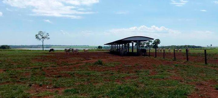 Suplementação no período das águas - A imagem mostra um pasto de uma fazenda onde se tem um cocho fechado e logo ao lado desse cocho tem alguns bois.