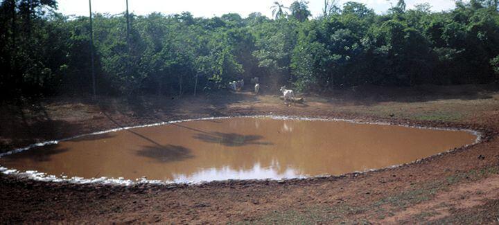 água limpa: a imagem está mostrando um lago onde os bois bebem água e está sujo