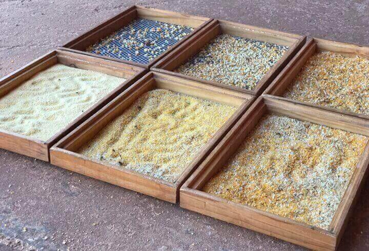 moagem do milho