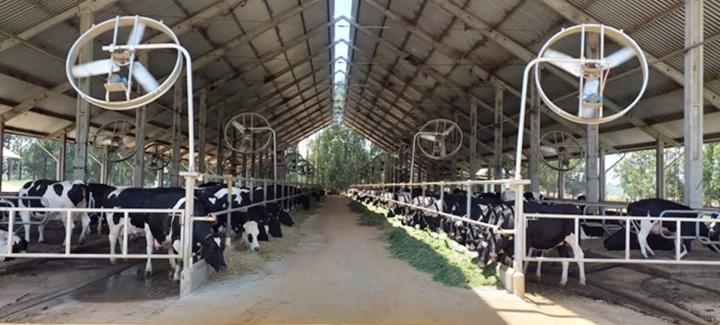 proteína do leite