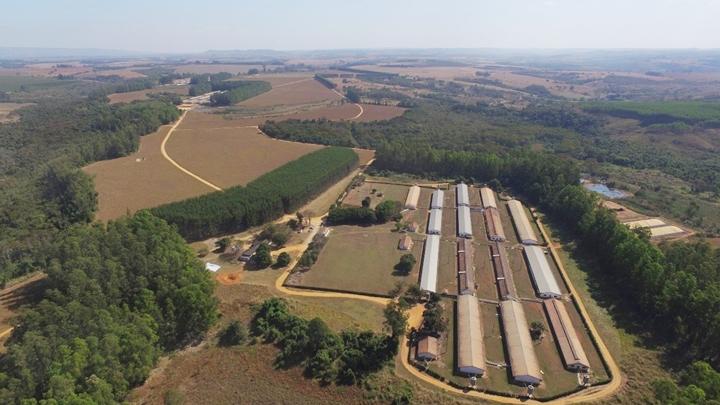 Peste Suína Africana: uma imagem tirada de cima mostrando alguns extensos balcões que possivelmente podem ser granjas de suínos