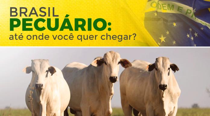artigo sobre Brasil Pecuário, aonde você quer chegar? Fala especificamente sobre a carne bovina