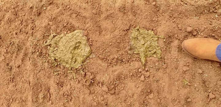 foto de fezes causada pela moagem do milho de maneira errada