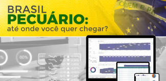 Imagem do artigo com foco na gestão, coleta e análise de dados em uma fazenda, com título na arte de BRASIL PECUÁRIO: até onde você quer chegar?