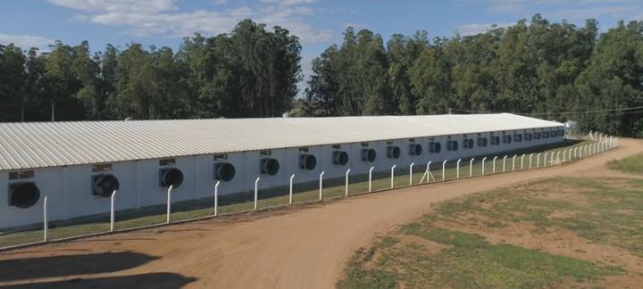 imagem que mostra uma cerca de isolamento da granja, importante detalhe para medida de biossegurança