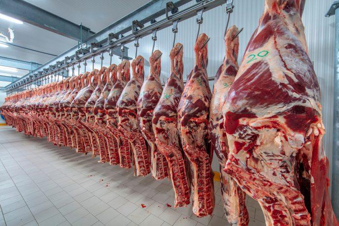 Capa do artigo sobre rendimento da carcaça bovina - foto que mostra várias carcaças bovinas penduradas em ganchos