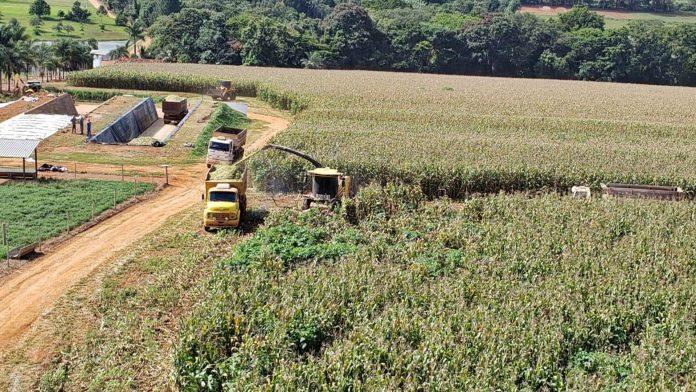 Foto de capa do artigo sobre a composição mineral da silagem de milho