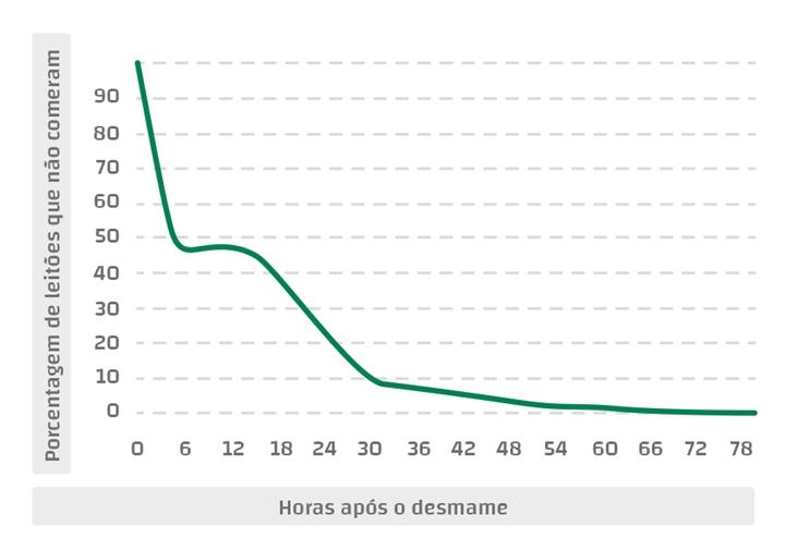 Gráfico 1 – Porcentagem de leitões que não comem, de acordo com o tempo após o desmame (Adaptado de Bruininx et al., 2001)