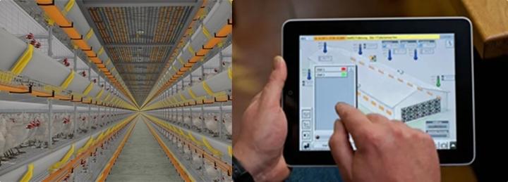 ilustrativa - a esquerda é um aviário com galinhas, a direita uma pessoa mexendo em dados do aviário em um tablet.