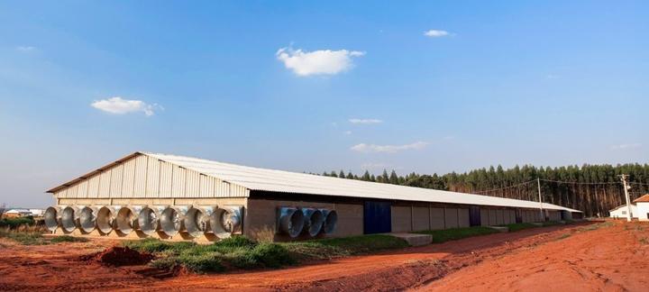 Imagem que representa o artigo Automação e benefícios dos processos produtivos em granjas de matrizes de frango de corte