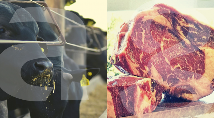 Capa do artigo sobre carne de qualidade