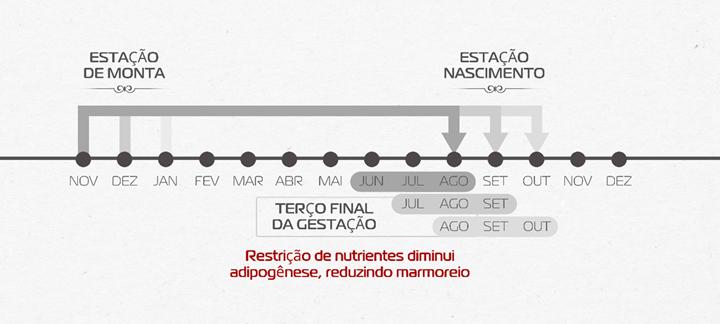 linha do tempo sobre a estação de monta e de nascimento e terço final da gestãõ sobre a restrição de nutrientes que diminui adipogênese, reduzindo marmoreio