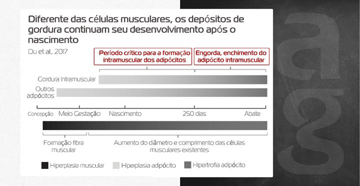 Imagem sobre sobre o desenvolvimento dos depósitos de gordura após o nascimento
