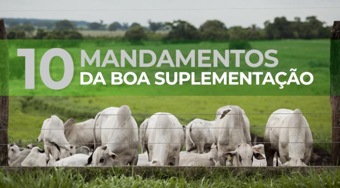 capa do artigo sobre os 10 mandamentos da boa suplementação de bovinos