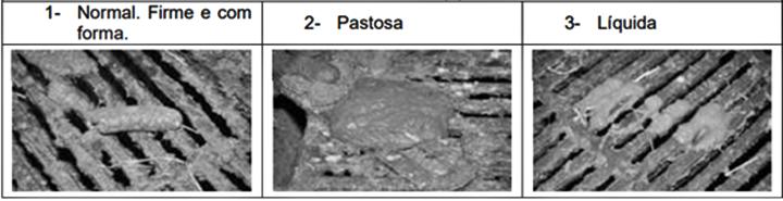 Fotografia das fezes dos suínos em diferentes fases (normal, pastosa e líquida) - foto do artigo sobre o tema redução de antibiótico em suínos